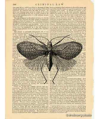 Moth #2 Art Print on Antique Book Page Vintage Illustration Nocturnal Insect