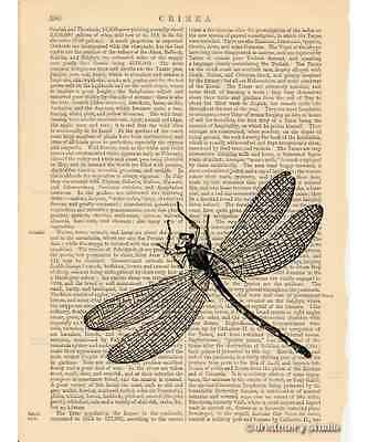 Dragonfly Art Print on Antique Book Page Vintage Illustration Garden Insect