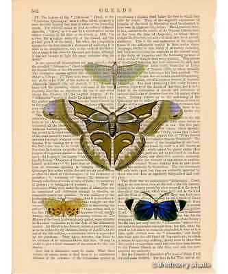 Moth Butterflies #2 Art Print on Vintage Book Page Vintage Garden Insect Decor 2