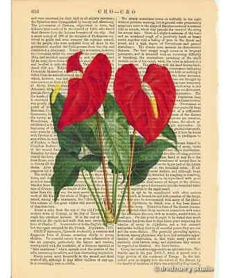 Anthurium Flamingo Flower Art Print on Antique Book Page Vintage Illustration