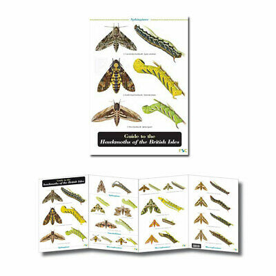 British Insects Laminated Field Guides Identification Posters Bugs Minibeasts 8