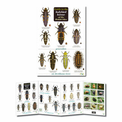 British Insects Laminated Field Guides Identification Posters Bugs Minibeasts 9