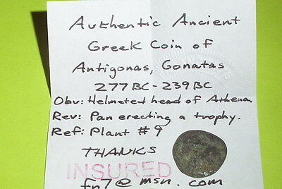 ANTIGONUS GONATAS 239 BC Ancient GREEK COIN pan trophy Athena goddess good old