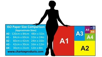Body Building Poster Weight Training Workout Gym Exercise Instruction Chart