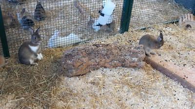 Kork Röhre: Natur Kork, Kork Rinde, Nager | gereinigt | 60 cm lang, ⌀= 15-20 cm 11