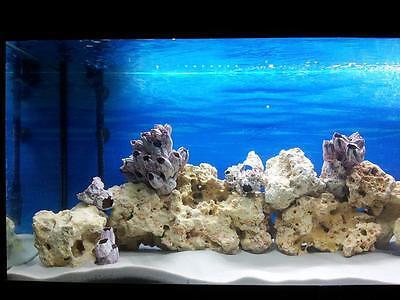 25 Kg Natural White Aquarium Silica Sand Free Coral Tree Decoration 3