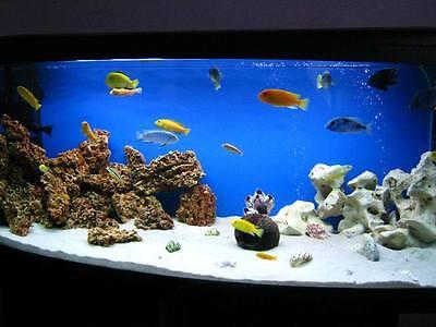 20 Kg White Dolomite Sand Gravel For Malawi Cichlid Tanganyika Aquarium, Coral