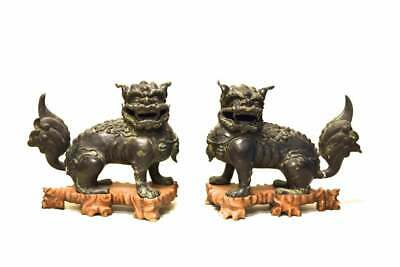 A Pair Large and Rare Chinese Ming Dynasty Bronze Foolions with Rosewood Stands. 12
