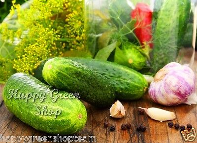VEGETABLE - CUCUMBER GHERKIN F1 - 100 SEEDS pickler for early pickling Cornichon 4