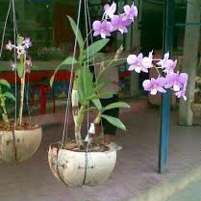 HALF COCONUT HUSK SHELL HANGING BASKET POT WALL MOUNTING ORCHID FLOWER PLANTER