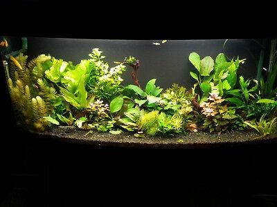 15 KG NATURAL BLACK AQUARIUM GRAVEL 2-5mm AQUASCAPING IWAGUMI IDEAL FOR PLANTS 7