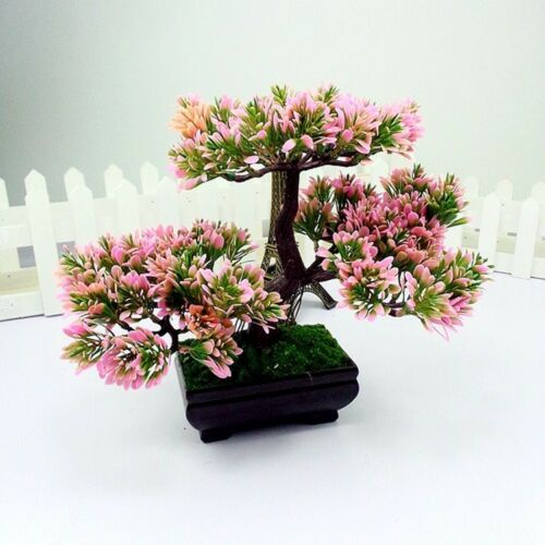 office bonsai tree.  Bonsai 5 Of 7 Greeting Pine Office Desk Bonsai Tree Black Plant Pot Home Table  Decorations UK To