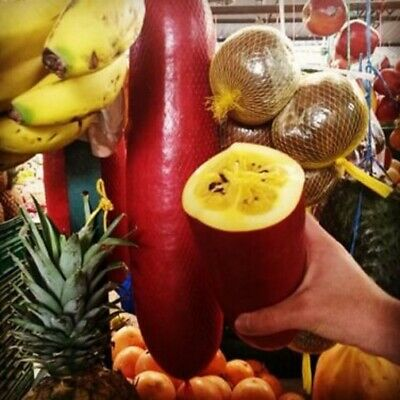 5 Graines de Melon banane, Sicana odorifera, Cassabanana seeds 3