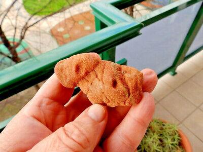 "Fosiles Trilobites "" Fabulosos Y Rarisimos Estromatolitos Del Sahara  -  1E18 4"