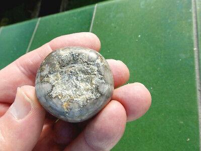 """Fosiles Erizos """" Extraordinario Erizo Discoidea Cylindrica Marruecos  - 2D19 """" 2"""