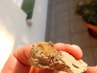 "Minerales "" Fabulosos Cristales Aciculares De Aragonito De Pantoja  -  9A16 "" 4"