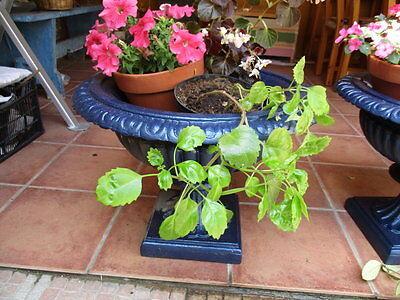 Jardineras De Hierro Fundido Antiguas Restauradas En Color Azul / Antique Fused 10