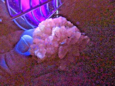 """Minerales """" Bonitos Cristales De Calcita Dte. Perro Mina Moscona  -  2A18 """" 8"""