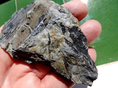 """Fosiles Helechos """" Fantastico Helecho Pecopteris+Calamites De Leon  -  3M19 """" 7"""