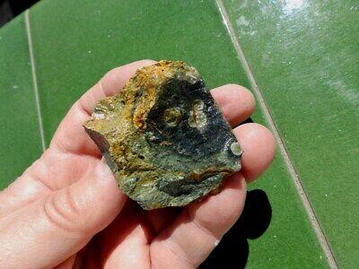 "Fosiles Trilobites "" Fabulosos Y Rarisimos Estromatolitos De Madagascar - 3F19 7"