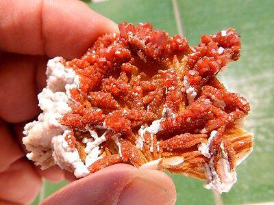"""Minerales """" Extraordinarios Cristales Rojizos De Vanadinita Marruecos - 8C16 """" 7"""
