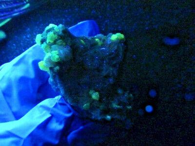 """Minerales """" Bonitos Cristales De Cerusita+Barita+Galena De Marruecos  -  1A19 """" 2"""