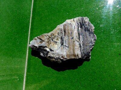"""Fosiles Helechos """" Fantastico Helecho Pecopteris+Calamites De Leon  -  3M19 """" 2"""