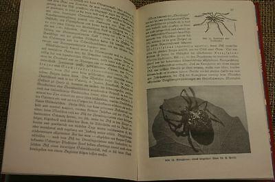 Fachbuch giftige Tiere, tierische Gifte, Schlangengift, Tiergifte, Ausgabe 1932
