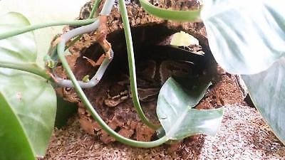 Kork Röhre: Natur Kork, Kork Rinde, Nager | gereinigt | 60 cm lang, ⌀= 15-20 cm 10