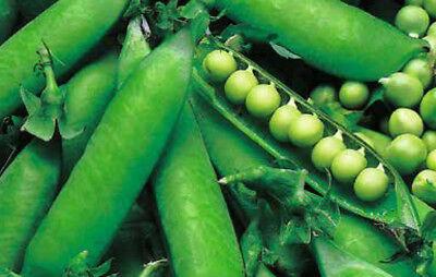 Schalerbse Eminent 15225 Sämereien Gemüse Erbsen Hülsenfrüchte Samen