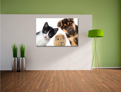 Divertente Trio Cane Gatto Porcellino D'India Quadro su Tel Decorazione Parete 2