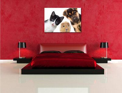 Divertente Trio Cane Gatto Porcellino D'India Quadro su Tel Decorazione Parete 4