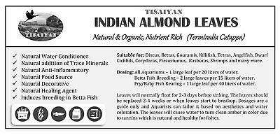 12 Indian Almond Leaves 25 Grams, A+ Catappa Ketapang for Fish, Shrimp, Aquarium