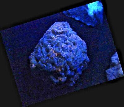 "Minerales "" Bonitos Cristales Fluorescentes De Fluorita Mina Moscona - 10B17 "" 2"