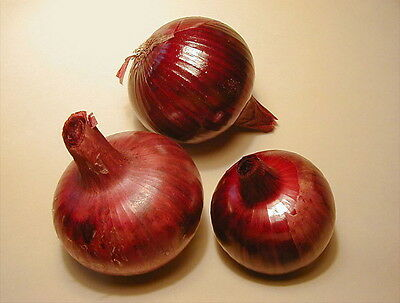 ONION SOUTHPORT RED GLOBE EXCELLENT STORAGE QUALITIES COMBINED SHIP 150+ Seeds 3