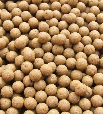 Green lip mussel shelf life boilies for carp and coarse fishing 15mm