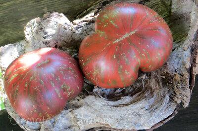 10 graines de tomate RUSSIAN COSSACK unique très rare heirloom tomato méth.bio 2