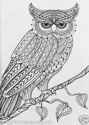 4 Of 10 Animal Kingdom Adult Colouring Book Owl Swan Lion Giraffe Jellyfish Detailed Art