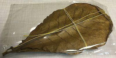 Seemandelbaumblätter 30 Stück 10-20cm Catappa Leaves Wasseraufbereitung Garnelen 2
