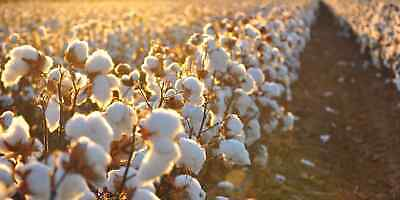8Pr Mens MEN Cotton Medical Circulation Diabetic LOOSE TOP SOCKS King size 11-14 8