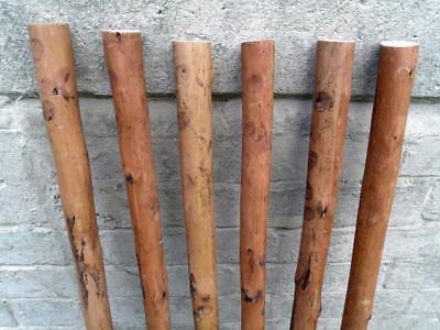 3 Chestnut Shafts Shanks Seasoned Straightened Stickmaking Walking Stick Making 2