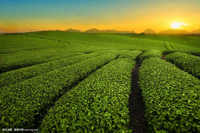 Bestnote schwarzer Oolong-Tee-natürlicher Tee Tieguanyin 50g schwarzer Tee Tea 8