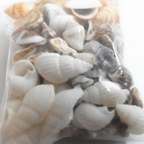 Aquarium beach mixed sea shell tiny shells nautical crafts for Tiny shells for crafts
