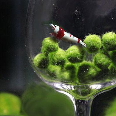 Nano Marimo Moss ball-monkey Live aquarium plant fish tank betta sea triops-java 5
