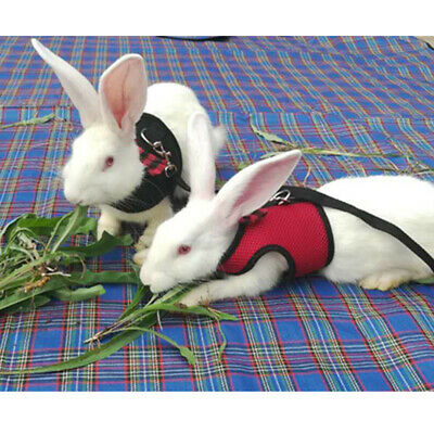 Large Black/Red Adjustable Soft Harness with Elastic Leash for Rabbit Bunny 8