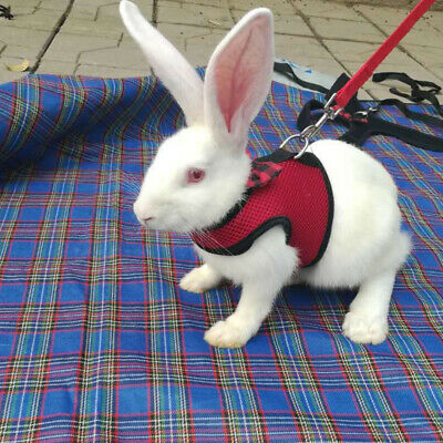 Large Black/Red Adjustable Soft Harness with Elastic Leash for Rabbit Bunny 3