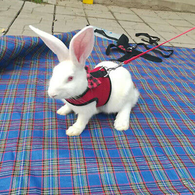Large Black/Red Adjustable Soft Harness with Elastic Leash for Rabbit Bunny 7