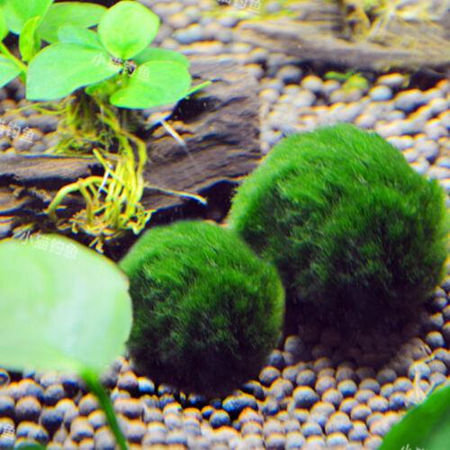 how to clean aquarium ornaments of algae