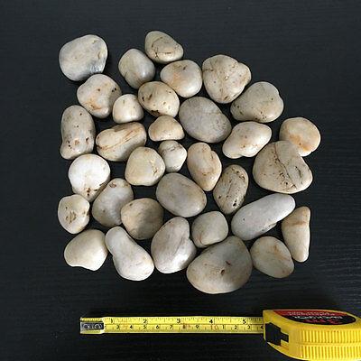 1kg New Assorted Beige Natural Stones Pebbles Aquarium Decoration Garden Vase 6