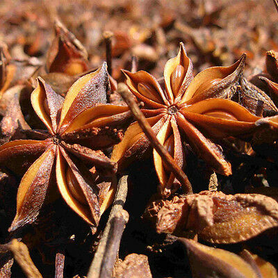 50g/Bag Chinese Kitchen Cooking Food Hot Pot Seasoning Spice Star Anise Aniseed 5